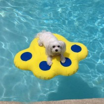 Paws Aboard Doggy Lazy Raft Yellow