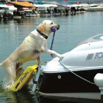 Pawz Pet Dog Boat Ladder